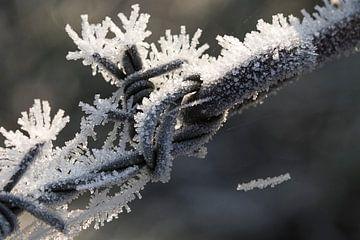 Bevroren prikkeldraad van Marieke de Boer