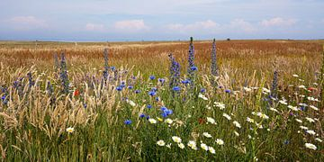 Wildblumenwiese von Reiner Würz / RWFotoArt