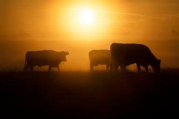 Eine Herde grasender Kühe bei einem schönen Sonnenaufgang von Eelco de Jong