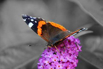 Vlinder van Saffira Meijer