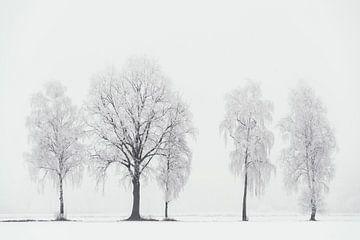 Fragmente des Winters von Lars van de Goor