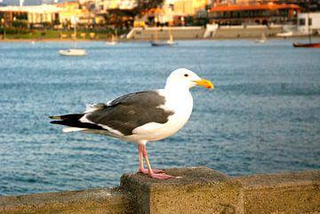 Seagull, San Francisco, California van Samantha Phung