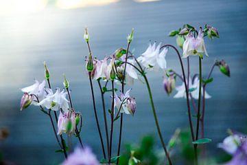 Bloemen in het ochtendlicht van Iris Lobregt