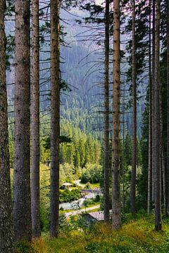 Österreich Natur von Amiran Tchikhinachvili
