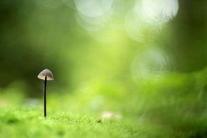 Klein paddenstoeltje in het groen