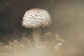 Eénzame paddenstoel in de mist van Angélique Vanhauwaert