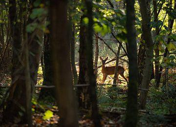 Hirsche in den Wäldern von Susan van Etten