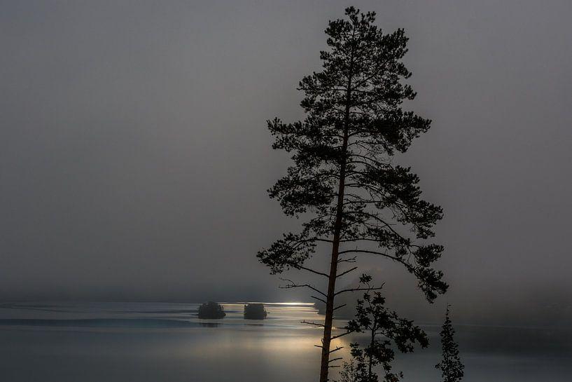 Misty morning van Arthur Wolff