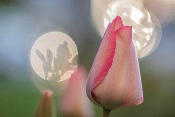 trio de tulipes sur Tania Perneel