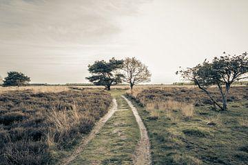 Wandelen Over De Drentse Heidevelden  van Melvin Fotografie