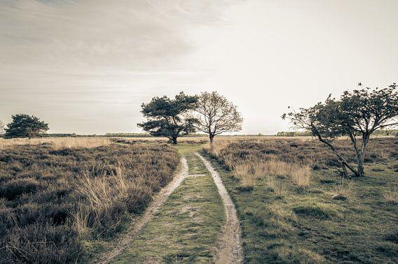 Wandelen Over De Drentse Heidevelden