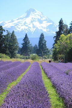 Lavendel am Fuße des Mt. Hood - vertikal von Sarah Lugthart