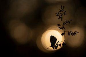 Icarusblauwtje in de zon van Erik Veldkamp