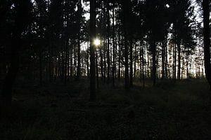 Sunlight in forest van Carlien Hartgerink