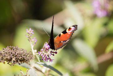 Roter Schmetterling von Valerie de Bliek