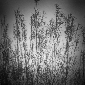 twiggy 05 van poetic snapshots