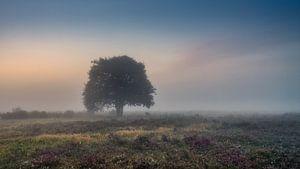 Eenzame boom op mistige heide van