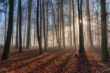 Schattenspiel im Nebelwald von Uwe Ulrich Grün