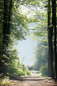 Wander- und Spazierweg in der Bremer Schweiz mit Morgennebel, Bremen-Sch�nebeck, Bremen, Deutschland