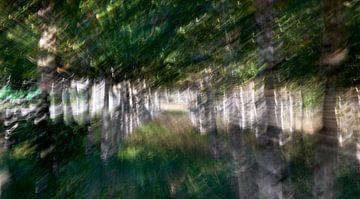 impressionistisch Berkenbos van Paul Pijpers