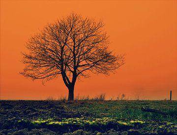 Eenzame boom in een oranje decor von Joyce Derksen