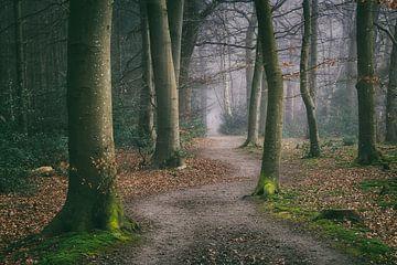 Gewundener Waldweg zwischen Buchen im Nebel