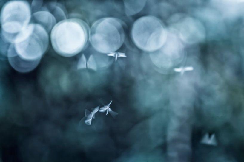 Dancing in the dark van Birgitte Bergman
