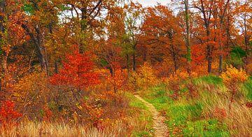 Herfst-Feest..! (Herfstkleuren) van Caroline Lichthart