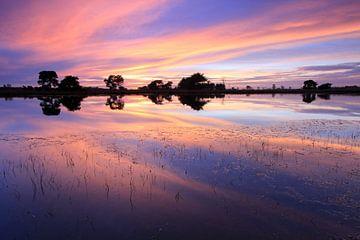 Strabrechtse Heide. von Patrick Brouwers