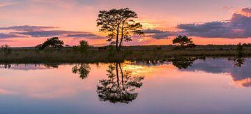 Panorama van een zonsondergang in Nationaal Park het Dwingelderveld
