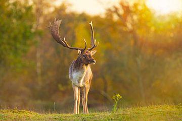 Hert onder zonsondergang van Sander Meertins