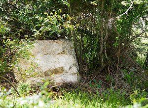 Boswachter van gesteente van