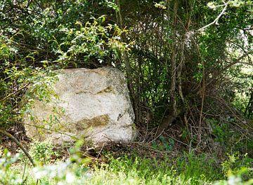 Boswachter van gesteente van Erna Kampman