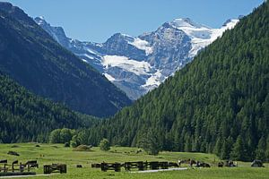 Blik vanuit het Cogne dal op het besneeuwde bergmassief van de Gran Paradiso. van