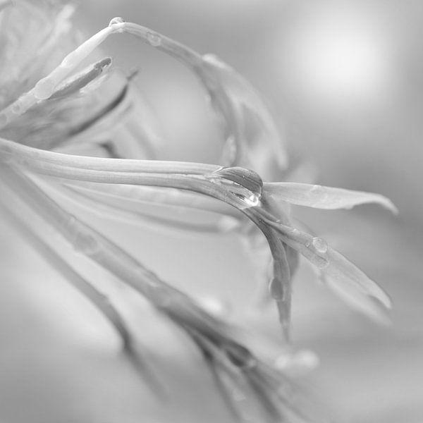 Delicate van Violetta Honkisz