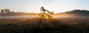 Goddelijke boom van Merijn Ruijter