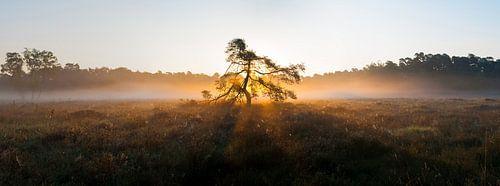 Goddelijke boom