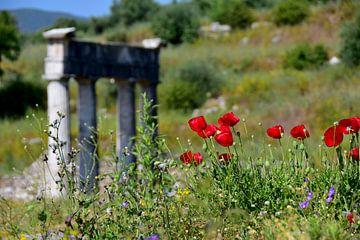 Klaprozen bij een Griekse tempel van