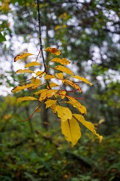 Gele bladeren van Dylan Adriaansen