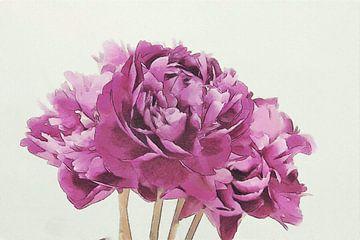 Pivoines pourpres - Peinture