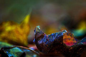 Herfst schoonheid van