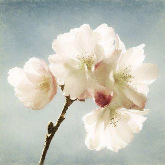 Blossom Up