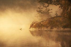 Brouillard matinal doré sur Ilona Schong