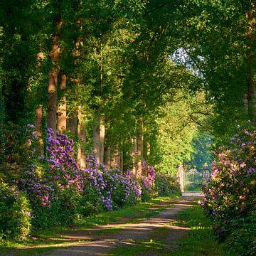 Rododendron in een kasteeltuin van Jenco van Zalk