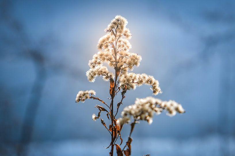 Seepflanze von Florian Kampes
