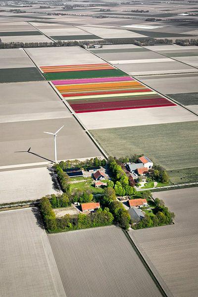Photo aérienne des fermes et des champs de tulipes sur Frans Lemmens