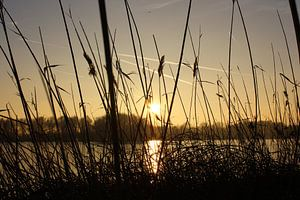 Riet en zonsondergang in Geestmerambacht van