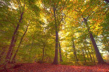 Herfst in het bos van Egon Zitter