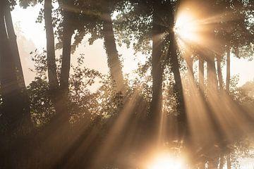 De zon schijnt prachtig door de bomen (liggend) van Michel Geluk