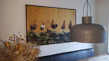 Kundenfoto: 6 Hühner in einer Reihe von Cocky Anderson